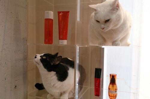 ニャンコのいるサロン♥♥♥<br>スクプルには2匹の看板猫がいます!!真っ白なニャンコはシミヲ、ぶちニャンコはバチョフ♥ぜひ2匹に会いに来てください♪